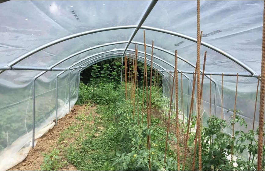 Abri tomates pieds droits 3m00 x 6m00