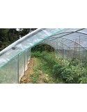 Abri tomates 3m00 x 7m50